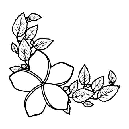 pistil: A monochrome silhouette with malva flower with leaves vector illustration