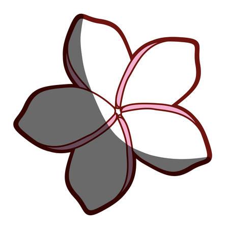 Red contour of malva flower vector illustration Illustration