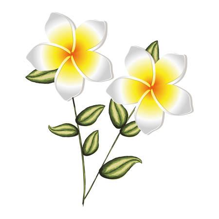 pistil: colorful silhouette of malva plant with flowers vector illustration Illustration