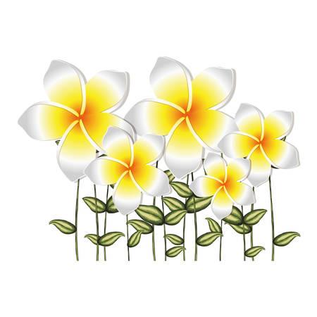 pistil: watercolor silhouette set of white malva flowers with stem and leaves vector illustration