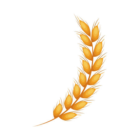 Icona spiga di grano. grano agricole alimentari e tema naturale. progettazione isolata. illustrazione di vettore Archivio Fotografico - 77347379