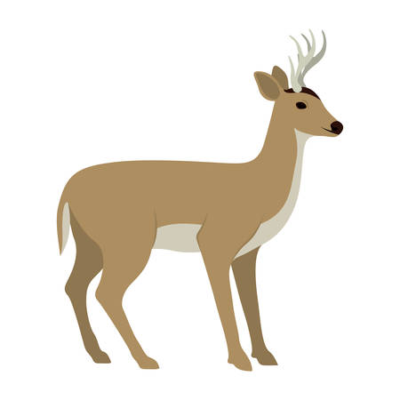 simple life: Deer icon. Livestock animal life nature and fauna theme. Vector illustration Illustration