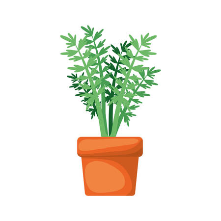 white background with carrot plant in flower pot vector illustration