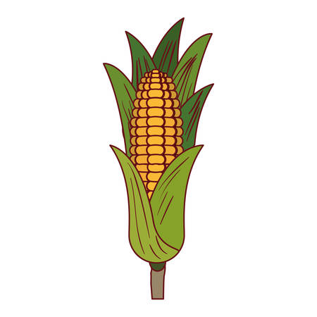 sweetcorn: A white background with corn cob with leaves with thick contour vector illustration Illustration