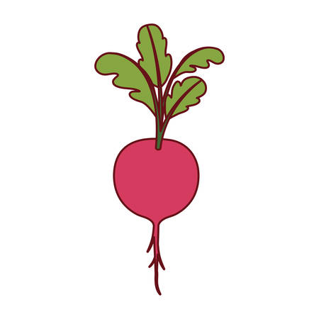 white background of beet with stem and leaves and thick contour vector illustration Illustration