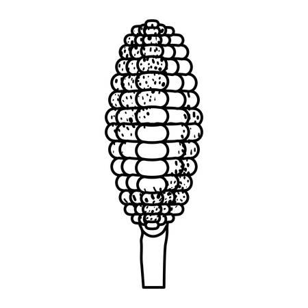 corncob: black silhouette of corncob in close up vector illustration