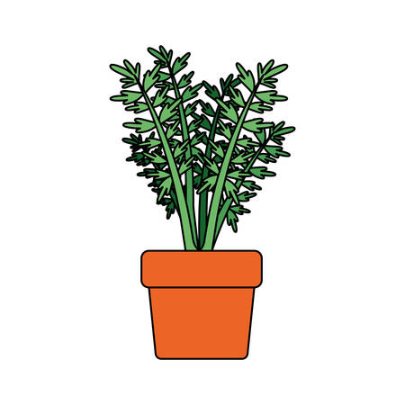 white background with carrot plant in flower pot with thick contour vector illustration Illustration