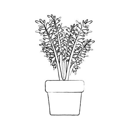 monochrome blurred silhouette of carrot plant in flower pot vector illustration