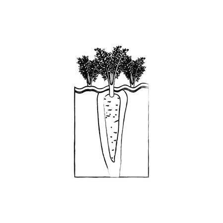 monochrome blurred silhouette of organic farming of carrot vector illustration