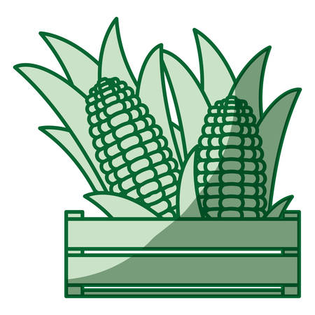 sweetcorn: green silhouette of thick contour of wooden box with corn cobs in closeup vector illustration