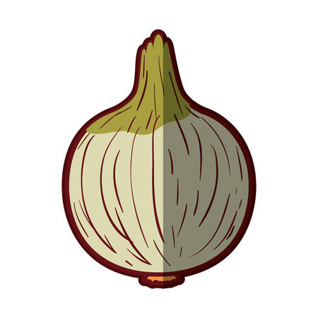 white background with onion in closeup with thick contour vector illustration