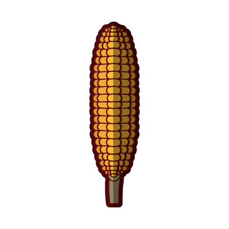 sweetcorn: white background with corncob in close up with thick contour vector illustration