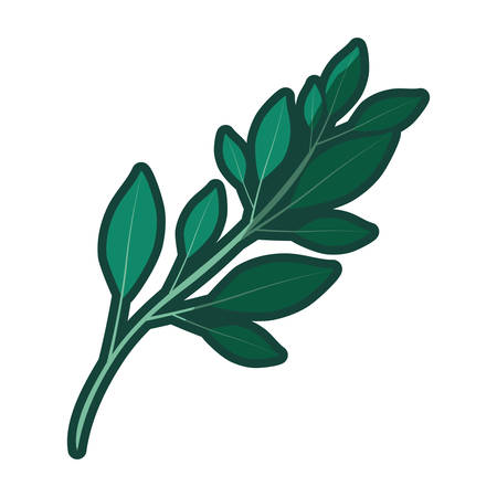 colorful thick contour of branch with leaves vector illustration Illustration