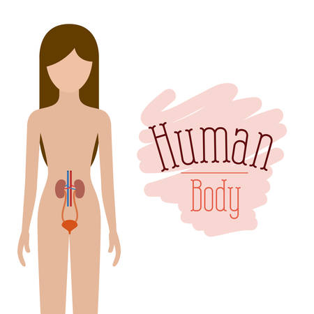 colorful silhouette female person with renal system human body vector illustration Illustration