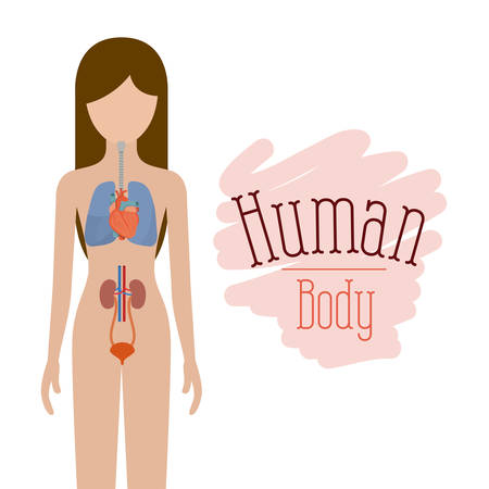 myocardium: Colorful silhouette female person with systems of human body vector illustration