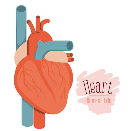 white background with colorful hearth system human body vector illustration Illustration