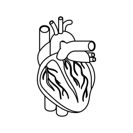 sketch silhouette heart system human body vector illustration Illustration
