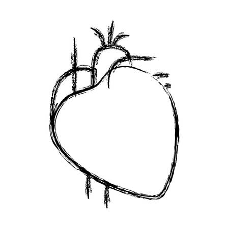 blurred hand drawing contour heart system human body vector illustration Illustration