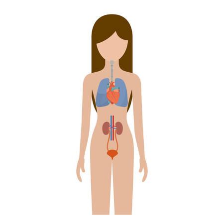 colorida silueta persona femenina con los sistemas respiratorio y renal del cuerpo humano ilustración vectorial Vectores
