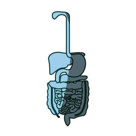 blue color shading silhouette human digestive system vector illustration Illustration