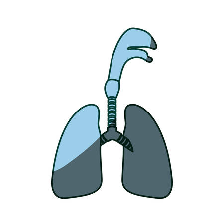 lung bronchus: blue color shading silhouette respiratory system with windpipe vector illustration
