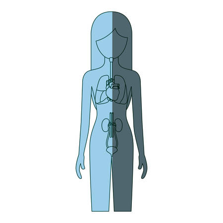 myocardium: blue color shading silhouette female person with respiratory and renal systems of human body vector illustration