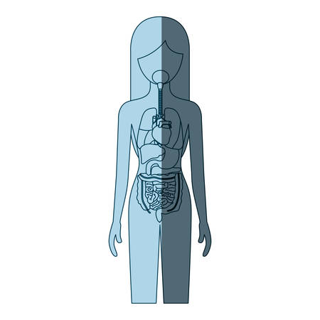 blue color shading silhouette female person with internal organs system of human body vector illustration