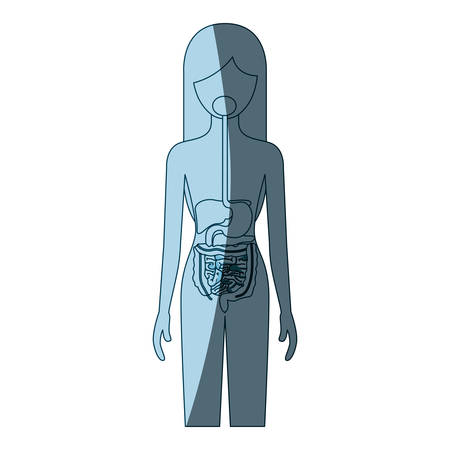 human anatomy: blue color shading silhouette female person with digestive system human body vector illustration Illustration