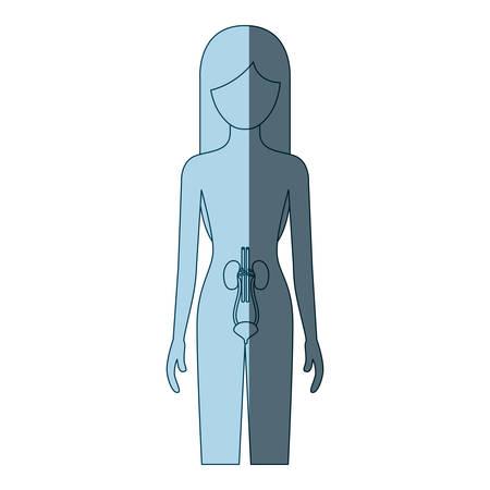 blauwe kleur arcering silhouet vrouwelijke persoon met nierstelsel menselijk lichaam vector illustratie