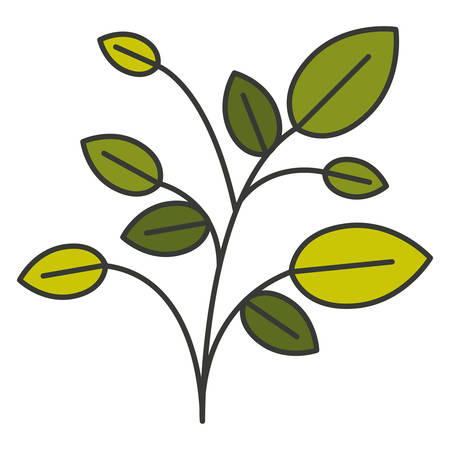 potting soil: colorful silhouette of plant with branches and leaves with thin contour vector illustration Illustration