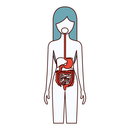 rectum: color sections silhouette of female person with digestive system human body vector illustration