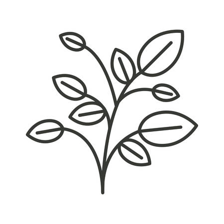 cultivate: monochrome silhouette of plant with branches and leaves vector illustration