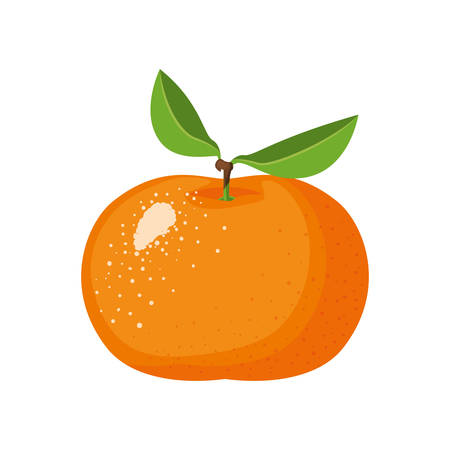 white background with realistic tangerine fruit vector illustration Banco de Imagens - 82402389