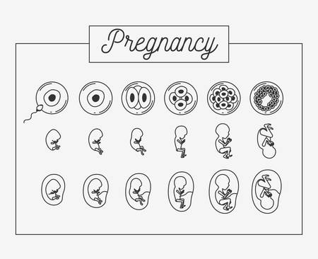 white background silhouette set pregnancy process in rectagular frame vector illustration