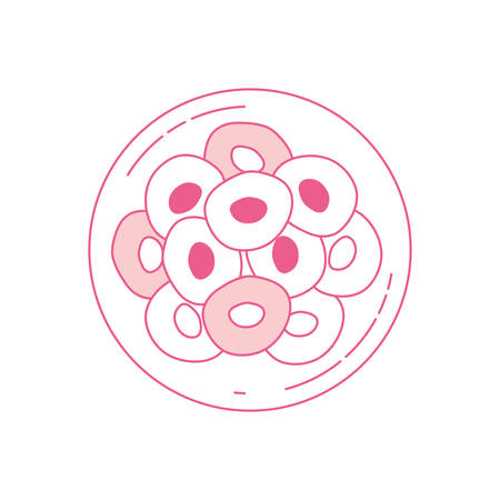 zygote: pink silhouette of front view division of the ovule in several cells vector illustration