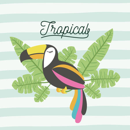 toucan bird tropical with leaves on decorative lines color background vector illustration