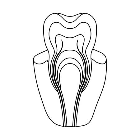 tooth with nerve and root view monochrome silhouette vector illustration