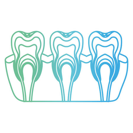 teeth with nerve and tooth root view in degraded green to blue color contour vector illustration