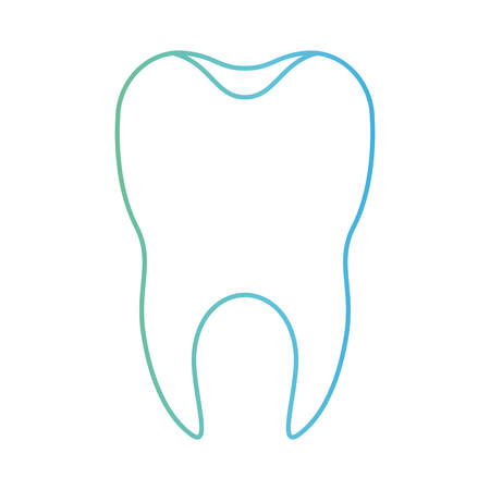 healthy tooth with root in degraded green to blue color contour vector illustration