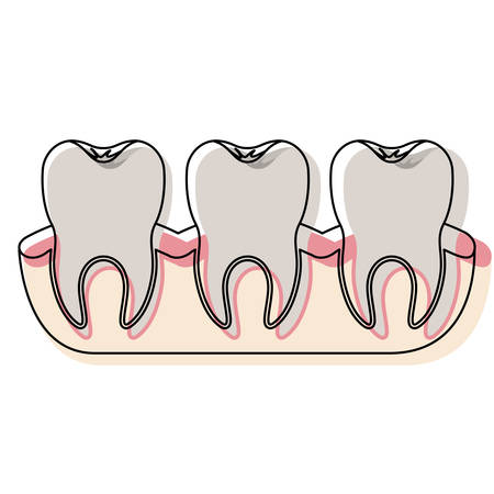 teeth with tooth root view in watercolor silhouette vector illustration