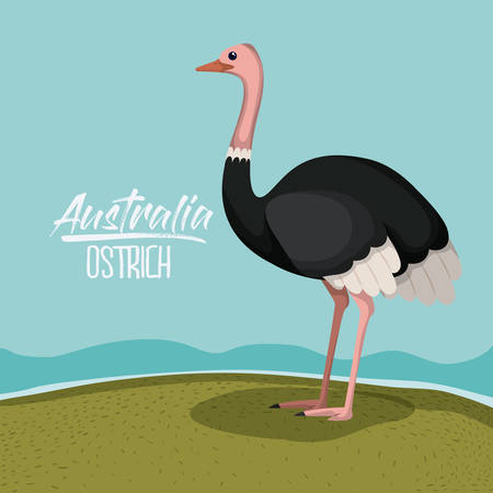 australia ostrich poster with outdoor scene in colorful silhouette vector illustration