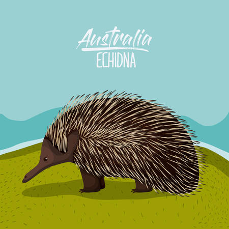 australia echidna poster in outdoor scene on colorful silhouette vector illustration