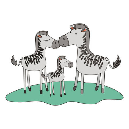 zebras couple and foal over grass in colorful silhouette on white background vector illustration