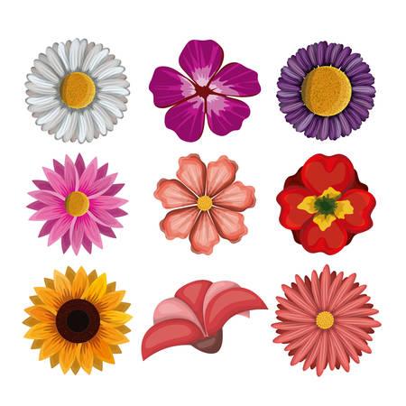 colorful flowers set in white background vector illustration Illustration