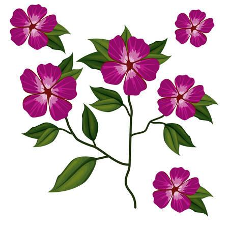 azalea flower plant in white background vector illustration Illustration
