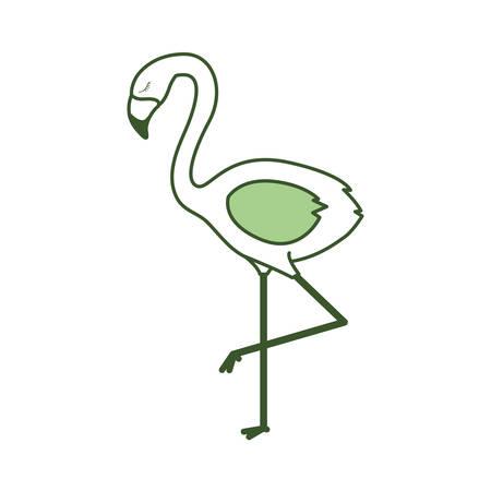 flemish tropical and exotic bird vector illustration design