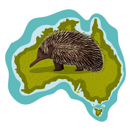 wild echidna over australian map vector illustration design