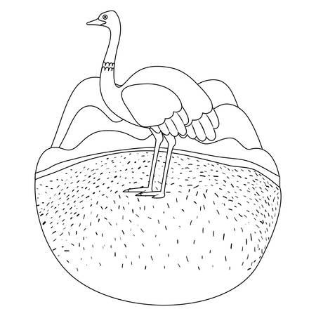 A wild ostrich Australian bird in the camp vector illustration design