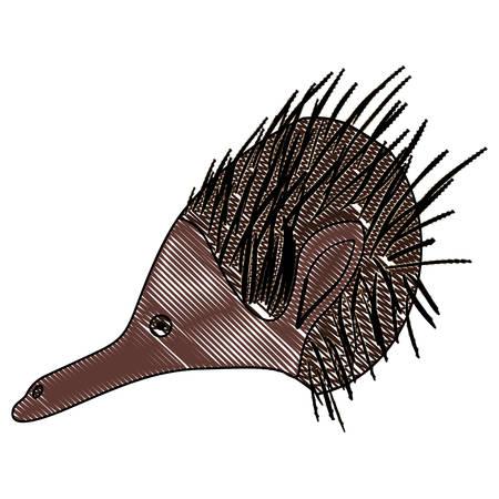 wild echidna australian creature head vector illustration design Illustration