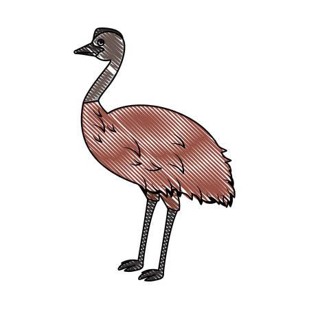 wild emu australian bird vector illustration design Illustration